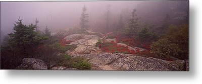 Trees Covered With Fog, Cadillac Metal Print by Panoramic Images