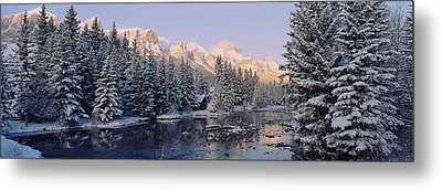 Trees Covered With Snow, Policemans Metal Print by Panoramic Images
