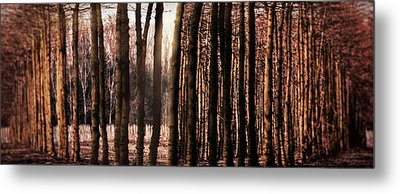 Trees Gathering Metal Print by Wim Lanclus
