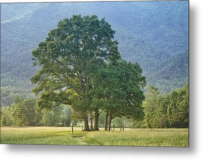 Trees - Great Smoky Mountains - Meadow Metal Print by Nikolyn McDonald