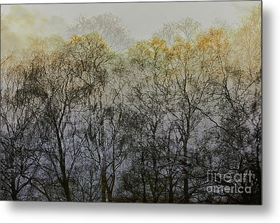 Trees Illuminated By Faint Sunshine, Double Exposed Image Metal Print by Nick Biemans