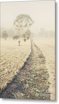 Trees In Fog And Mist Metal Print by Jorgo Photography - Wall Art Gallery