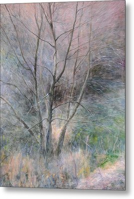 Trees In Light Metal Print by Harry Robertson
