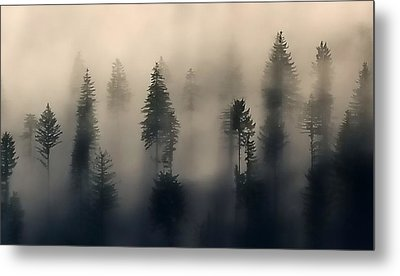 Trees In The Fog Metal Print by Jerry Sodorff