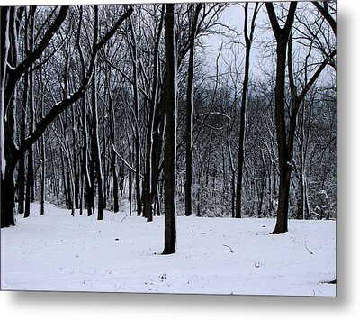 Trees In Winter Metal Print by Dave Clark