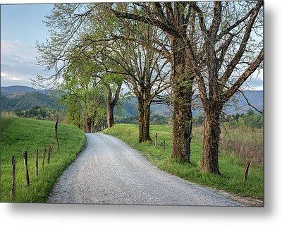 Trees On A Path Metal Print by Jon Glaser