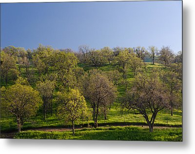 Trees On Hillside Metal Print