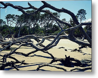 Trees On Jekyll Island Metal Print by Laurie Perry