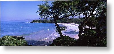 Trees On The Beach, Mauna Kea, Hawaii Metal Print by Panoramic Images