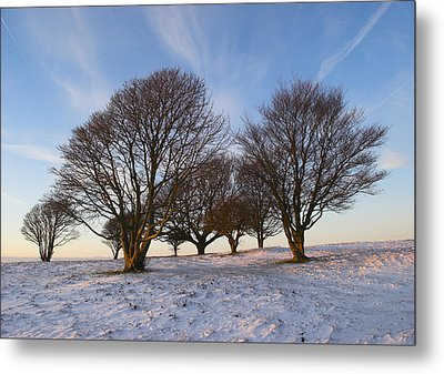 Trees On The Ring Metal Print
