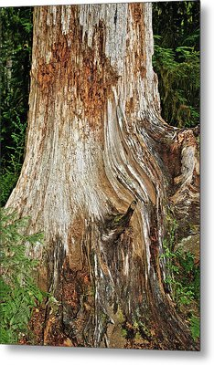 Trees On The Trails - Olympic National Park Wa Metal Print by Christine Till