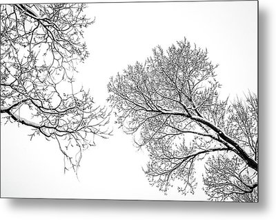 Metal Print featuring the photograph Trees Reaching by Marilyn Hunt