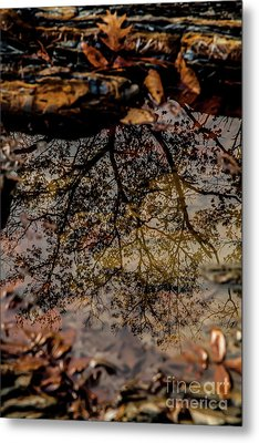 Metal Print featuring the photograph Tree's Reflection by Iris Greenwell