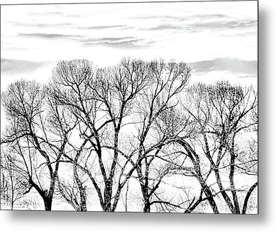 Metal Print featuring the photograph Trees Silhouette Black And White by Jennie Marie Schell