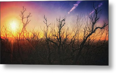 Metal Print featuring the photograph Treetop Silhouette - Sunset At Lapham Peak #1 by Jennifer Rondinelli Reilly - Fine Art Photography