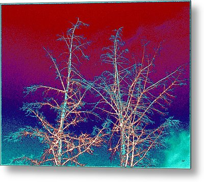 Treetops 4 Metal Print by Will Borden