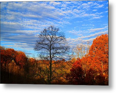 Metal Print featuring the photograph Treetops Sunrise by Kathryn Meyer