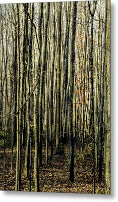 Treez Yellow Metal Print