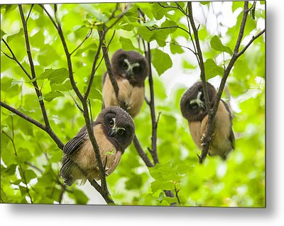 Trio Of Fledglings Photograph By Tim Grams