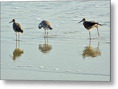 Trio Of Willets On Jekyll Metal Print by Bruce Gourley
