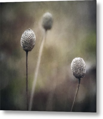 Trio Metal Print by Scott Norris