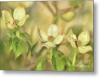 Metal Print featuring the digital art Triple Dogwood Blossoms In Evening Light by Lois Bryan
