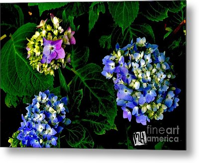 Metal Print featuring the photograph Triple Hydrangia In Spring by Marsha Heiken