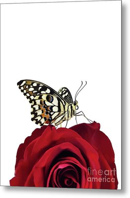 Tropical Butterfly On Red Rose Metal Print