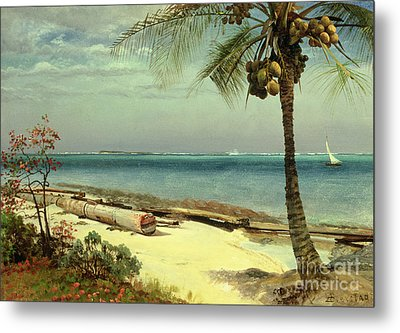 Tropical Coast Metal Print by Albert Bierstadt