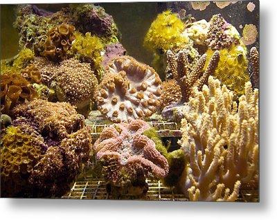 Tropical Fish Tank 10 Metal Print by Steve Ohlsen
