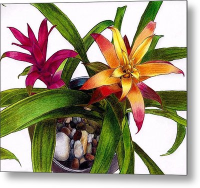 Bromeliads Indoor Flower Metal Print