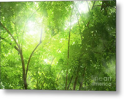 Tropical Forest Metal Print by Atiketta Sangasaeng