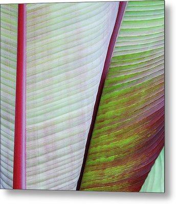 Tropical Leaves No 5  2009 Metal Print by Joseph Duba