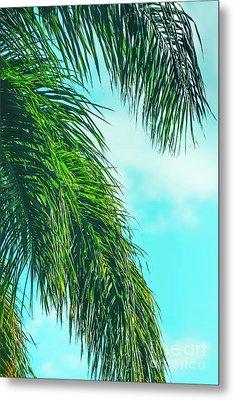 Tropical Palms Maui Hawaii Metal Print by Sharon Mau