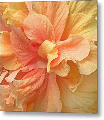 Tropical Peach Hibiscus Flower Metal Print