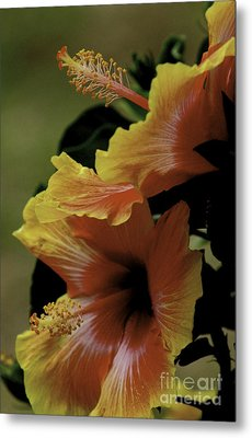 Metal Print featuring the photograph Tropical Punch by Lori Mellen-Pagliaro