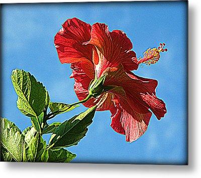 Tropical Red Hibiscus  Metal Print