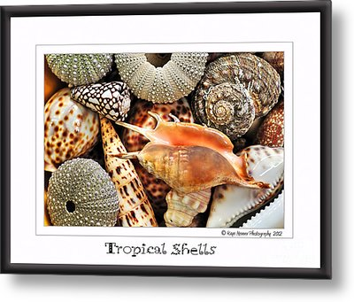 Tropical Shells... Greeting Card Metal Print by Kaye Menner
