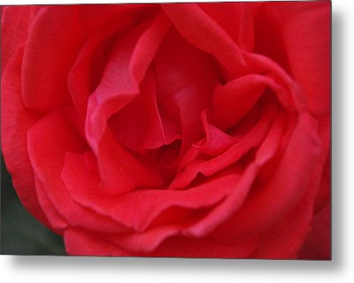 Tropicana Rose Metal Print by Robyn Stacey