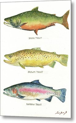 Trout Species Metal Print