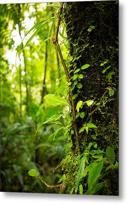Trunk Of The Jungle Metal Print by Nicklas Gustafsson