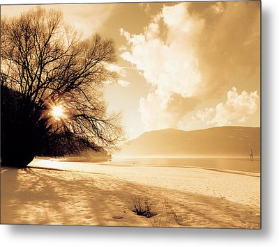 Truth In The Tree Metal Print by Scott Ballingall