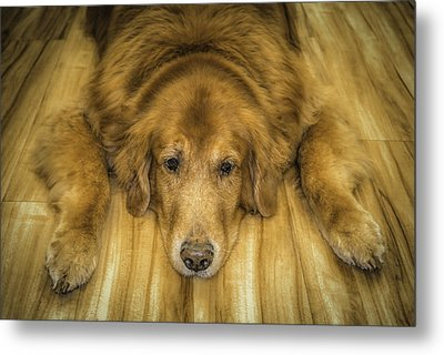 Tucker Metal Print by Marion Johnson