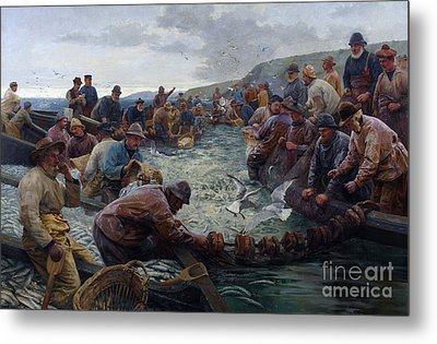 Tucking A School Of Pilchards Metal Print