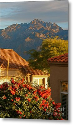 Tucson Beauty Metal Print by Nadine Rippelmeyer