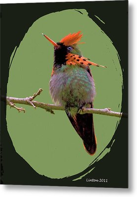 Tufted Coquette Hummingbird Metal Print by Larry Linton