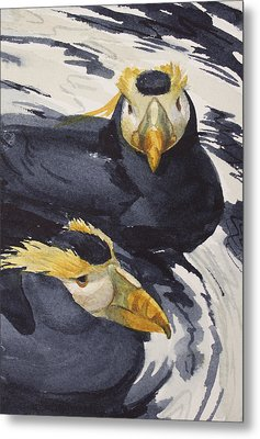 Tufted Puffins Metal Print