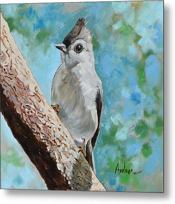 Tufted Titmouse #1 Metal Print by Amber Foote