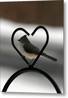 Tufted Titmouse In A Heart Metal Print by George Jones