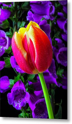 Tulip And Foxglove Metal Print by Garry Gay